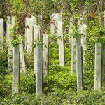 trees-2206090_1920